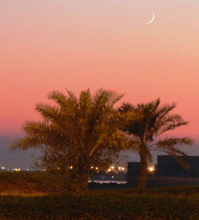 A picture of a crescent (new) moon in a red sky over two small trees, with the lights of a city behind them.